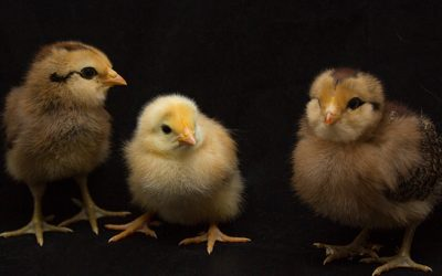 Why All the Chicken Littles Should Calm Down